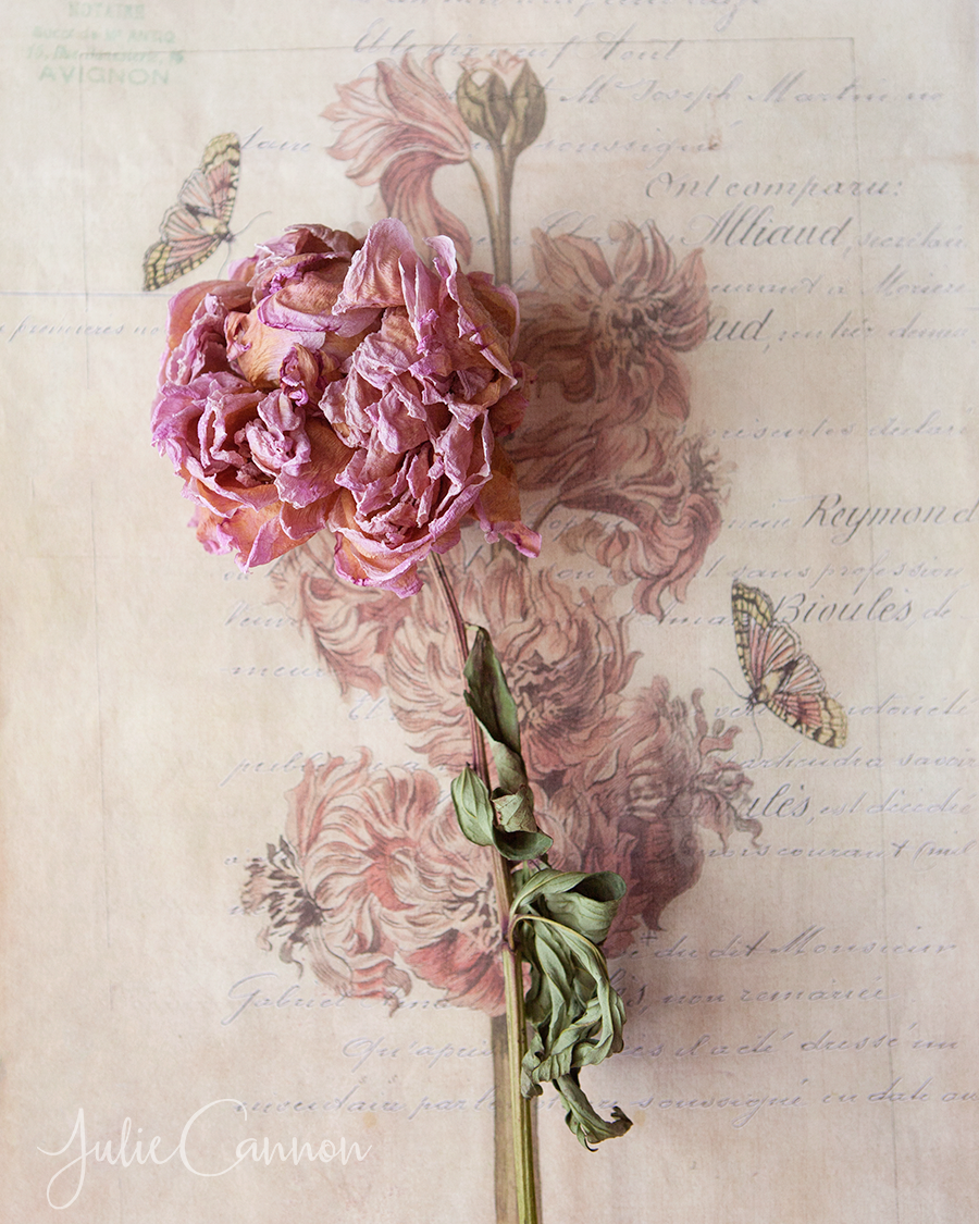 Peony-Vintage-French